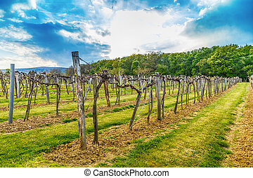 wijngaard, in, de, welen seizoen op