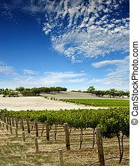 wijngaard, landscape