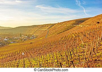 wijngaard, ondergaande zon , /, zonopkomst
