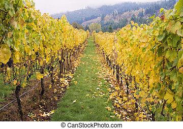 wijngaard, rijen, druif, wijngaarden