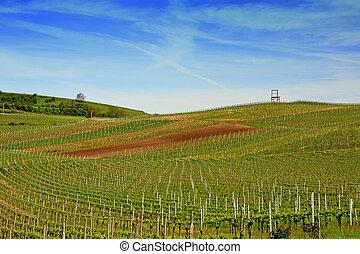 wijngaarden, gebied, kaiserstuhl