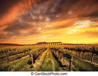 wijngaarden, morgen