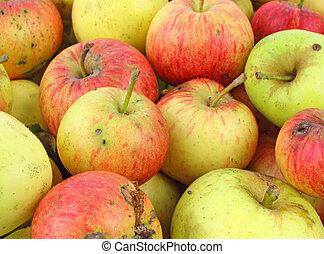 wild, äpfel