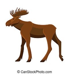 Wild adult moose with big branchy horns and strong legs. ...