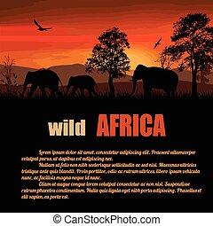 Wild Africa poster