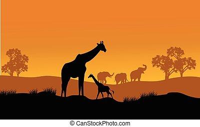 Wild african animals silhouettes