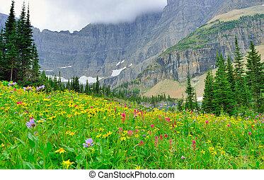 wild alpine flowers on the Glacier National Park landscape