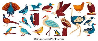 Wild and home birds, fowl set cartoon vector illustration, collection of european birds pigeon, crow, jackdaw, gull and owl, chicken.