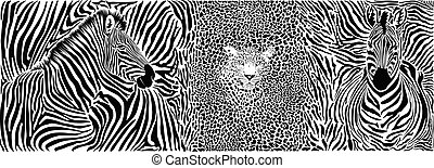 Wild animal background - template with motif zebras and leopard