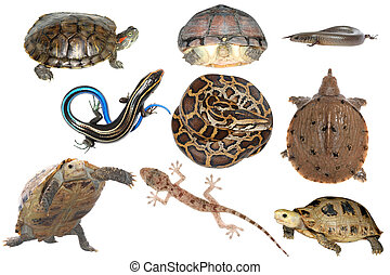 wild animal collection reptile snake lizard turtle and...