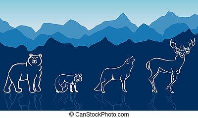 Wild Animal Compilation