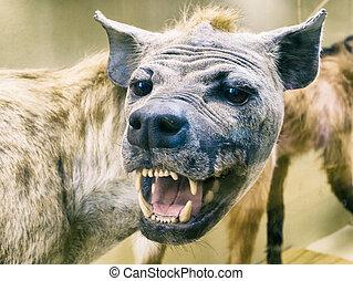 Wild animal. Evil Aggressive Dog. Background