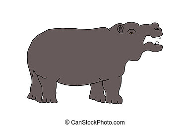 wild animal - hippo