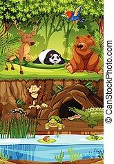 Wild animal in jungle