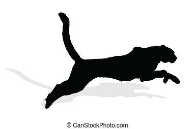 wild animal - puma, vector