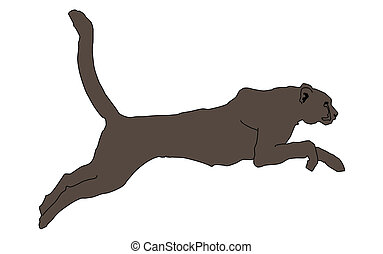 wild animal - puma