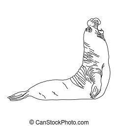 wild animal - SEAL