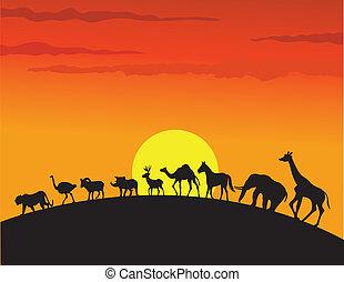 wild animal silhouette - illustration of wild animal...