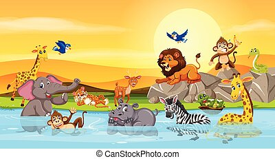 Wild animals at the river sunset