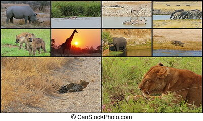 wild animals collage - african wild animals montage...