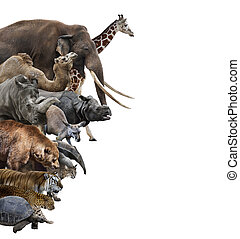 Wild Animals Collage - Wild Animals Collection Isolated On...