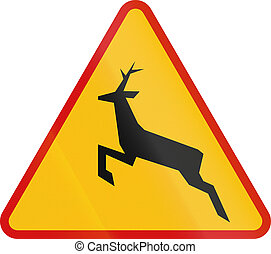 Wild Animals Crossing in Poland