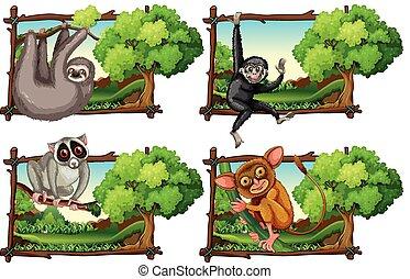 Wild animals haning on the branch