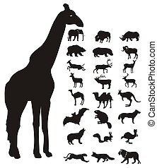 wild animals icons and silhouette