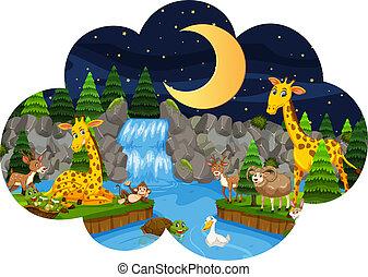Wild animals in nature at night