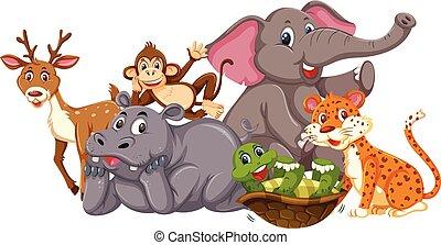 Wild animals on white background