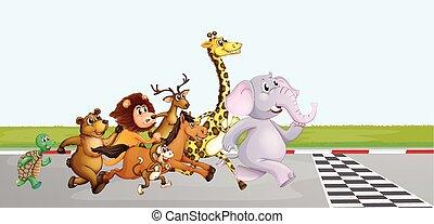 Wild animals running on the road