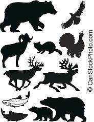 Wild animals  - Wild animals.  Vector   silhouette.