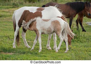 wild baby horse nursing
