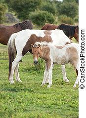 wild baby horse