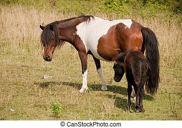 wild baby pony
