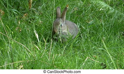 Small wild rabbit eating grass in its natural habitat in the forest glade