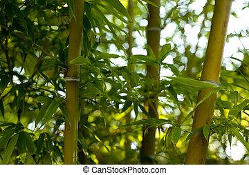 Wild bamboo background
