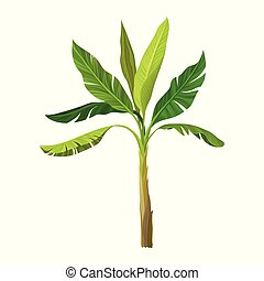 Wild banana palm with big bright green leaves. Cartoon icon of tropical fruit tree. Graphic design element for infographic. Detailed flat vector illustration