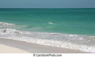 Wild Beach Caribbean.