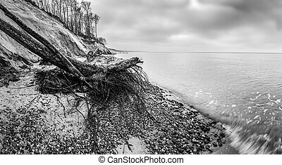 Wild beach with fallen tree and cliffs on winter, cloudy day. Waves on the sea.
