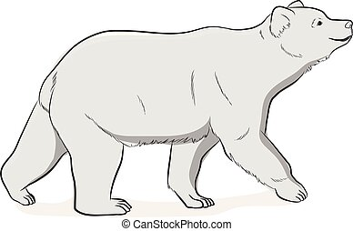 Wild Bear Vector Illustration