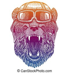 Wild bear wearing vintage aviator leather helmet. Image in retro style. Flying club or motorcycle biker emblem. Vector illustration, print for tee shirt, badge logo patch