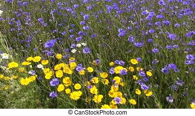 wild beautiful summer flowers field