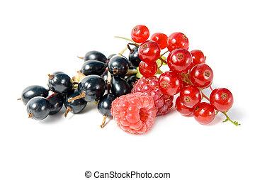 wild, berries.