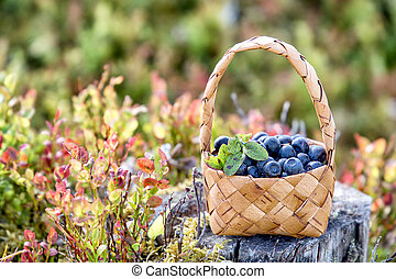 Wild berries in a basket