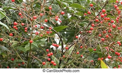 Wild berries in the forest.