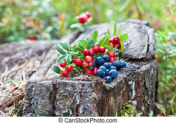 Wild berries on a green vegetative background in the forest