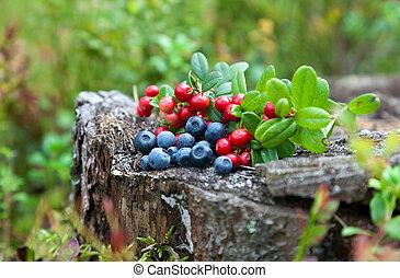 Wild berries on a green vegetative background in wood