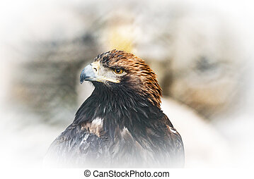 Wild bird on colorful background.