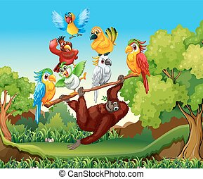 Wild birds and urangutan in the forest